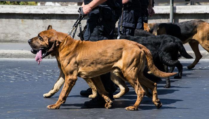 Formation agent de sécurité maître chien
